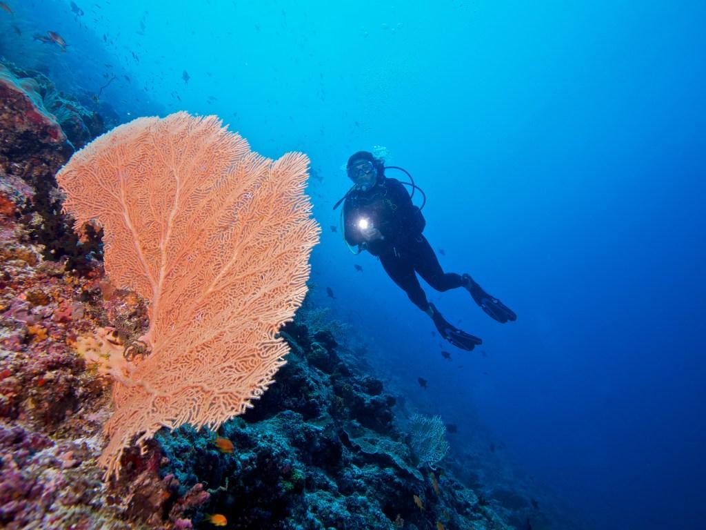 Kudadoo Private Island Maldives Activity Sea Diving - by Mark Captain, Luxuriate Life, Luxury Magazine UK